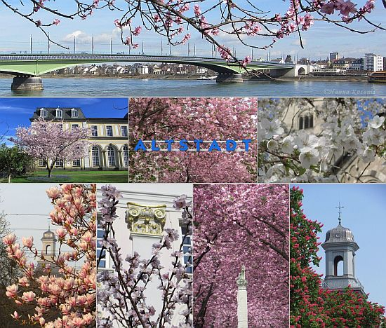 Bonn, Kennedybrücke mit Mandelblüte