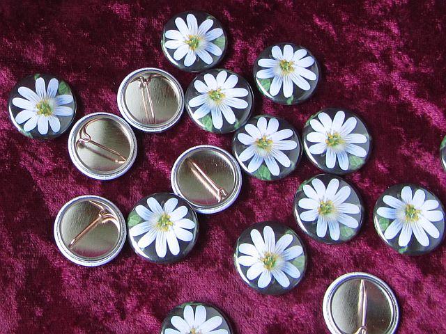 Kleine Ansteckbuttons mit Nadel, Durchmesser 25mm, Motiv Sternmiere