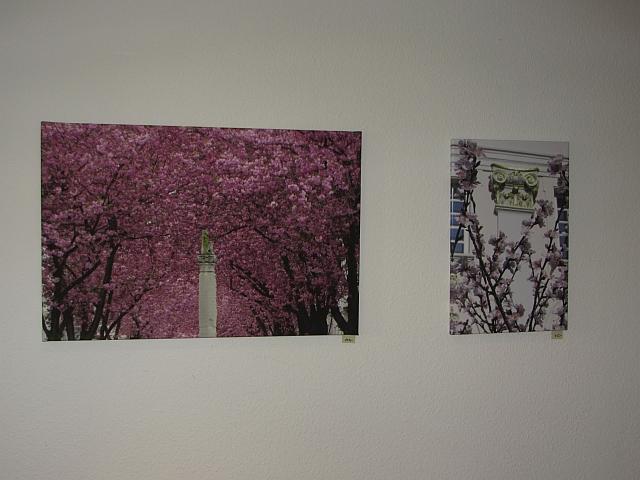 Leinwanddruck Kirschblüte Heerstraße und Mandelblüte Bonner Rathaus