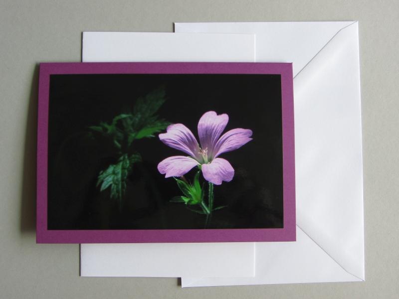 Foto-Grußkarte Geranium - Storchenschnabel B6 mit Einlegeblatt und Kuvert. Hanna Kocanis