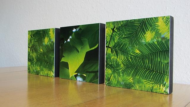 Urweltmammutbaum und Tulpenbaum auf MDF