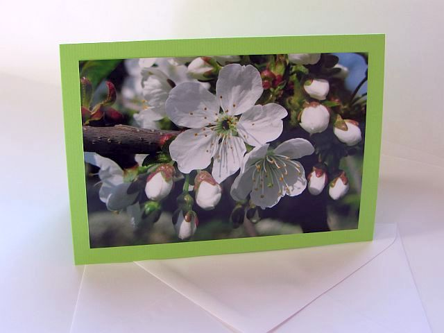Grußkarte B6 mit Briefumschlag - Kirschblüten