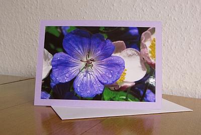 Grußkarte B6 mit Briefumschlag - Geranium mit Herbstanemonen