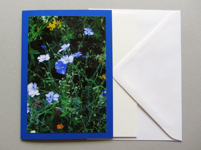 """Foto-Grußkarte """"Lein, Hornklee und andere"""" in B6 mit Einlegeblatt und Briefumschlag. Foto von Hanna Kocanis aus dem Garten des Museum Koenig"""